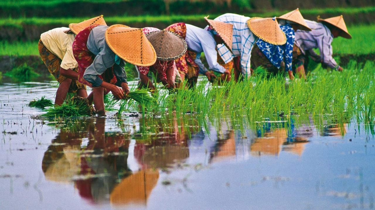 vietnam-curiosidades-cultura-la-vietnamita